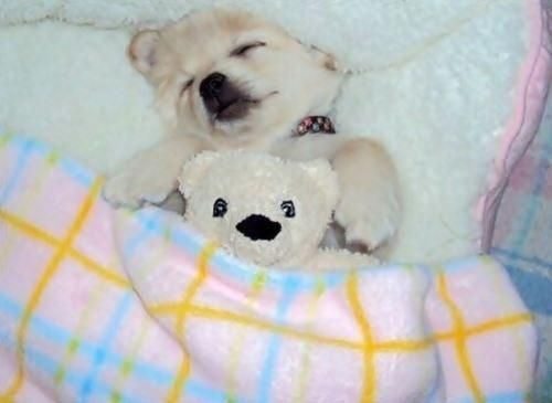 It's almost as if the bear is wide awake!  60 Real Animals Snuggling With Stuffed Animals • Page 2 of 5 • BoredBug