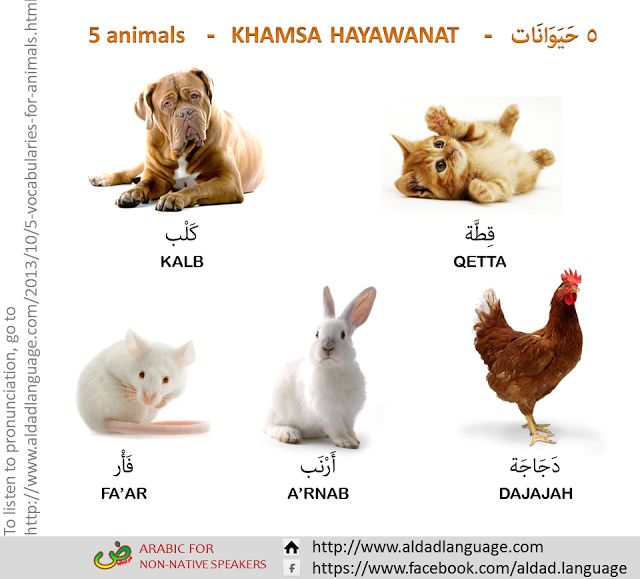 all animals names - photo #33
