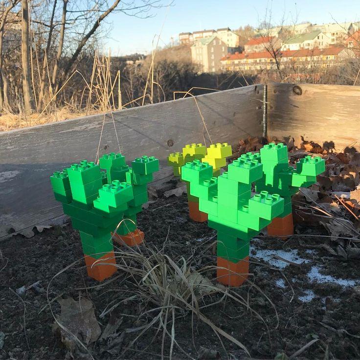 GMO . . Duplo Lego street art made some carrots in a guerrilla gardening garden. #gmo #improvingnature #guerillagardening #gerillaodling #carrot #carrots #homegrown