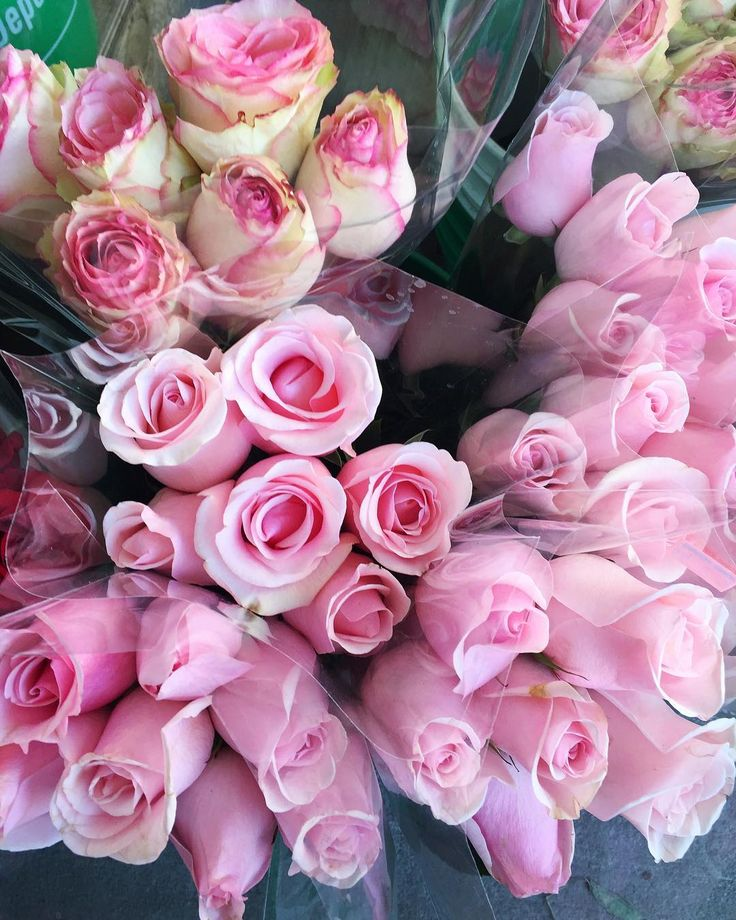 Pink Roses / Pretty Flowers