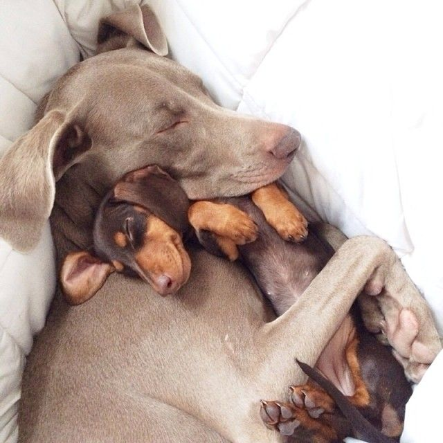 Harlow and Sage, one of the funniest + sweetest Instagram channels.