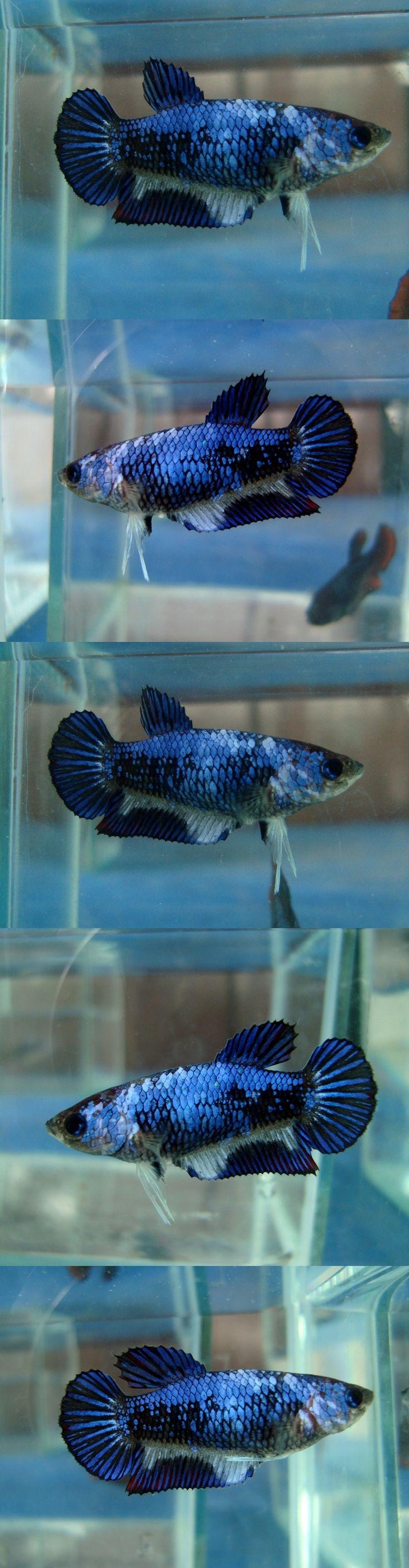 4230 best Aquariums images on Pinterest