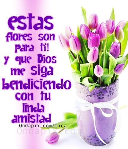 Imagenes De Flores Con Frases De Amistad