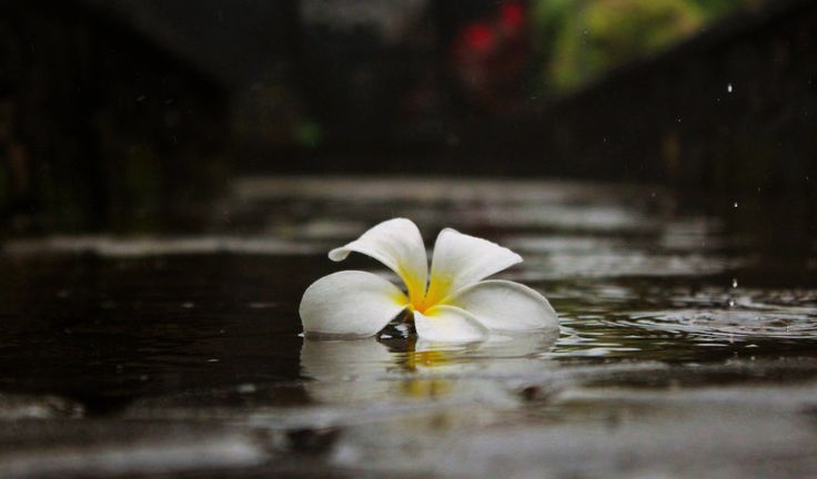 What to do in Bali on a rainy day