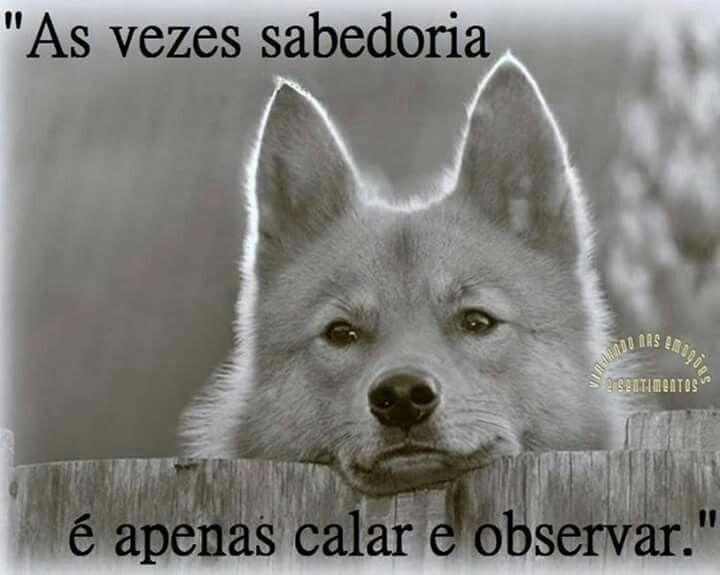 As Vezes Sabedoria é Apenas Calar E Observar...