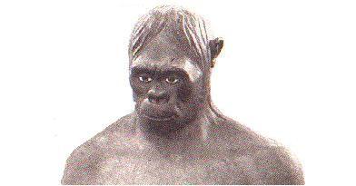 Java man not an ape-man after all pithecanthropus erectus trinil java man femur Lubenow Cuozzo Gish creationist evolutionist
