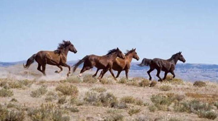 Κτηνωδία: Άγνωστοι σκότωσαν άγρια άλογα!