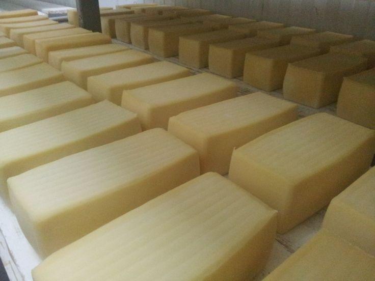 """El queso Nata de Cantabria es una evolución del Queso Pasiego, dada la gran producción de leche de la región, un comerciante en D. Jaime Diestro establece una quesería en el Valle de Pas, donde se elaboraban excelentes quesos frescos y cremosos, pero con la peculiaridad de que él incorpora la técnica holandesa del prensado mecánico de la pasta, elaborando el denominado """"queso pasiego de pasta prensada"""", el cual es el queso que hoy en día conocemos como Nata de Cantabria."""