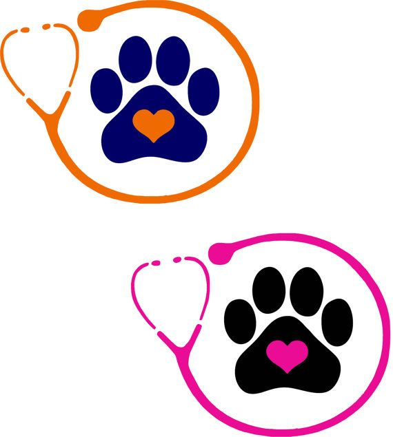 Veterinarian or Vet Tech Stethoscope Vinyl Decal - 2 Colors