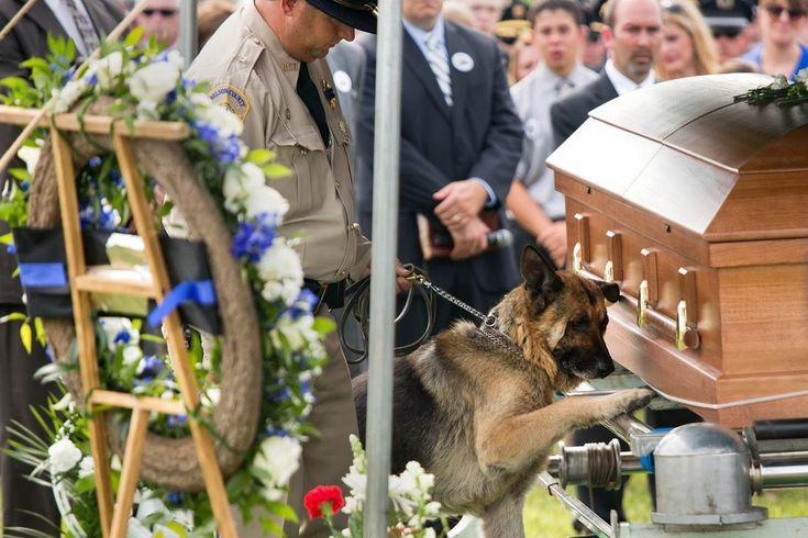 Figo, um cão da polícia de Kentucky, EUA, dá o seu último adeus a seu parceiro humano, o oficial Jason Ellis, que foi morto numa emboscada cinco dias antes.