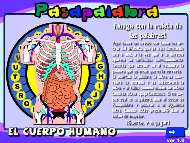 352 best cuerpo humano images on pinterest activities - Happy casa mestre ...