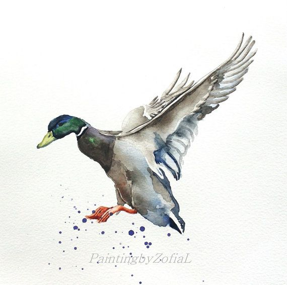 Mallard duck original watercolor painting bird by paintingbyZofiaL