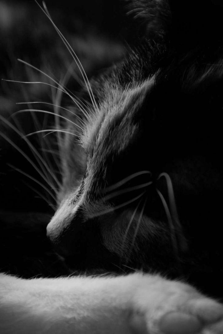 Cat by Suzanne Bonne