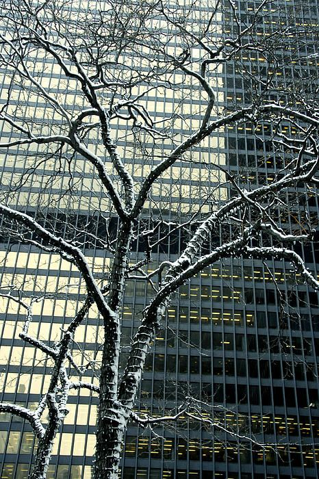 In February 2008, a fresh dusting of snow covered downtown Toronto as I set out with my camera is search of some cityscapes. I was attracted by the tree and struggled to get a photo of it that wasn't overwhelmed by the office tower behind it. Once I decided to work with instead of against the tower's hard to ignore presence, it became a matter of composing the image in a way to make the building's grid lines and reflected light work with the shape of the tree. #tree, #building, #contrast