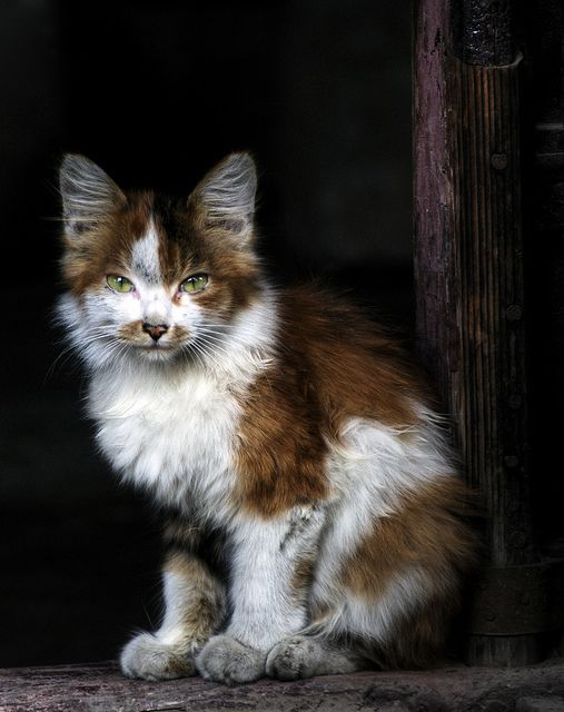 """""""If homeless cats could talk, they would probably say, give me shelter, food, companionship, and love, and I'll be yours for life."""" --Susan Easterly    Please adopt."""