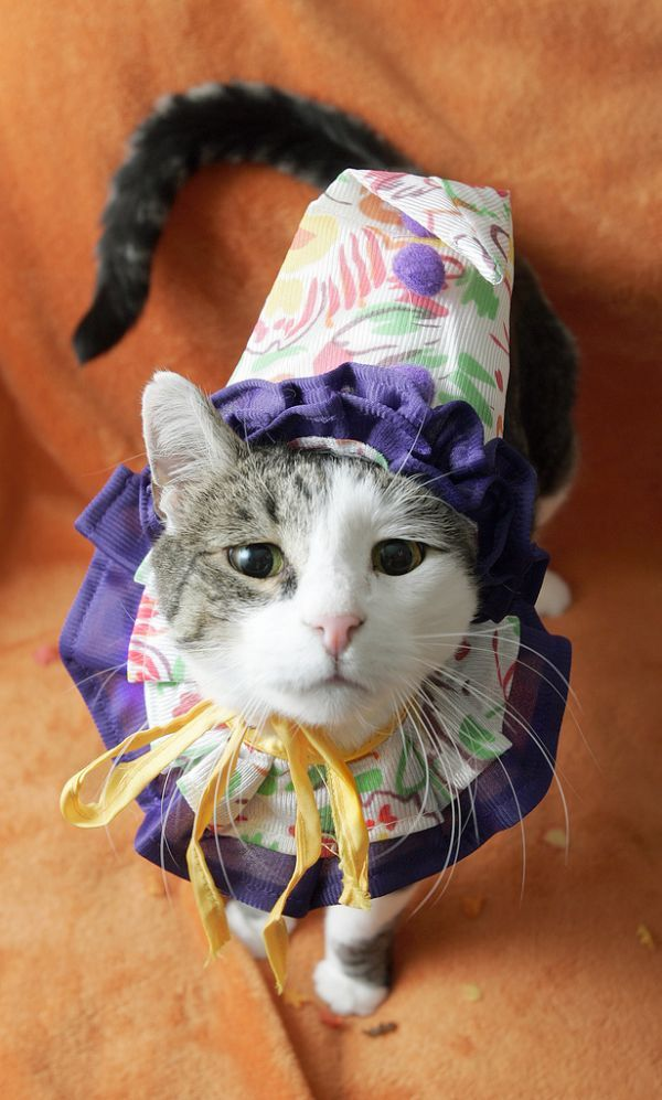Over 40 Fantastic Animal Halloween Costumes - not all kittehs but all cute