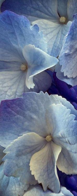 (via Pinterest)  Jane Ellsworth Interiors • 1 day ago   Found on thisivyhouse.tumblr.com