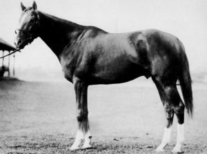 Palestinian(1946)Sun Again- Dolly Whisk By Whiskaway. 3x5 To Whisk Broom II, 5x5 To Amie & Flying Fox. 45 Starts 14 Wins 9 Seconds 8 Thirds. $296,525. Won Endurance H, Jersey S, Empire City H, Westchester H, Brooklyn H, Golden Gate H, 2nd Preakness S, Butler H, Wood Memorial S, Hollywood Gold Cup, Gallant Fox H, 3rd Ky Derby, Belmont S, Arlington Classic, Trenton S.