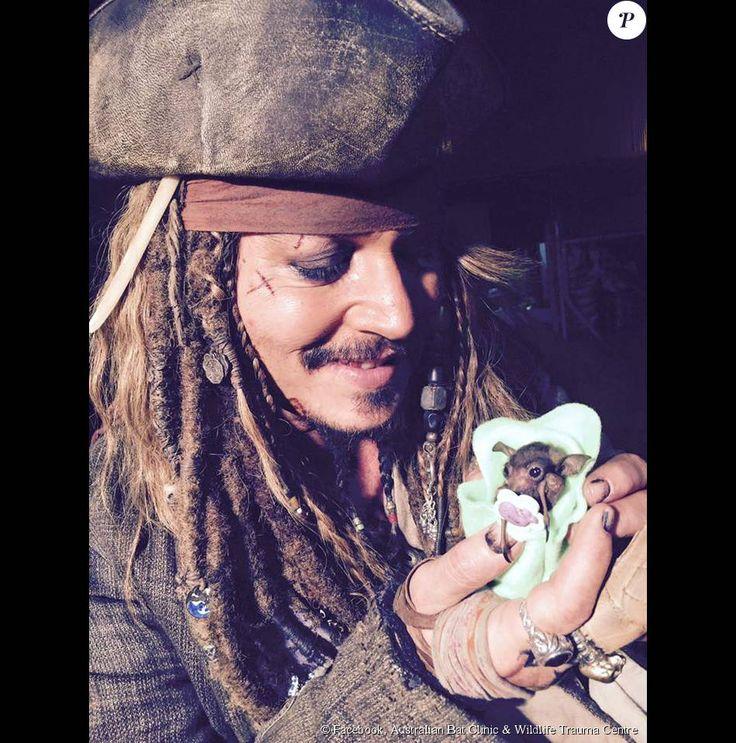 Johnny Depp parrain d'un bébé chauve-souris à l'Australian Bat Clinic & Wildlife Trauma Centre en Australie. (photo postée le 24 juillet 2015)
