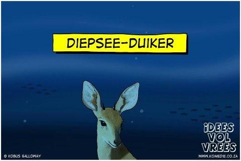 Diepsee duiker