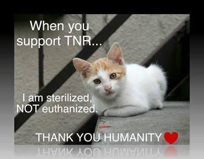 If you have outdoor cats in your neighborhood, get them fixed to stop the cycle and then you can care for them, feed them and even love them (maybe from a distance in some cases). TNR works. Here are resources to help: www.indyferal.org: