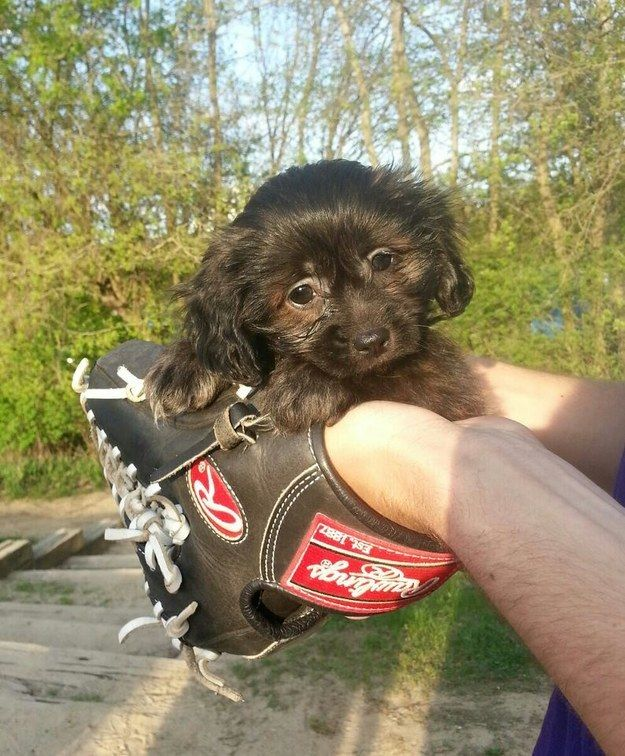 And this weensy, precious miracle. | 21 Puppies Who Should Be Protected At All Costs