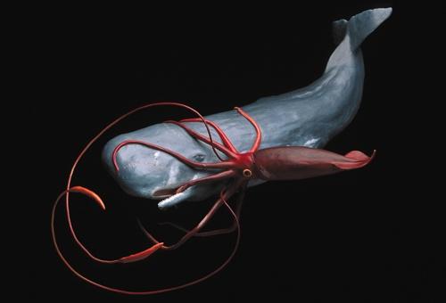 sperm whale & gian...