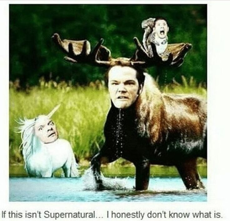 SPN // Moose, Squirrel and...the Pink Sparkling Unicorn