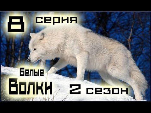 Сериал Белые волки 8 серия 2 сезон (1-14 серия) - Русский сериал HD