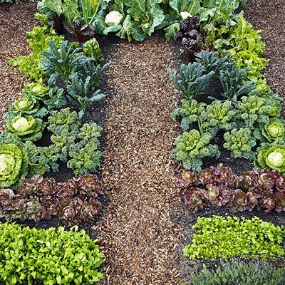 Plant a Cool Season Vegetable Garden Gardens Vegetables