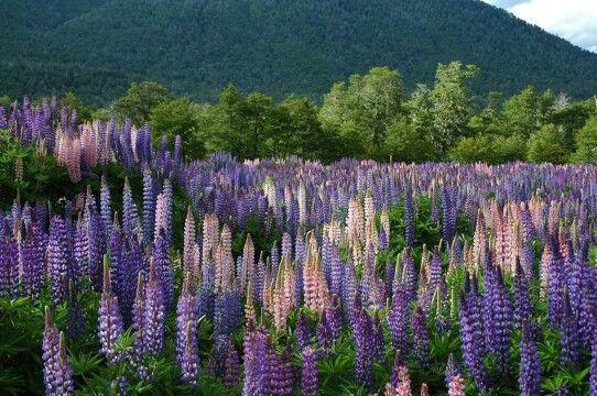 Primavera. Ruta de los Siete Lagos. Patagonia. Argentina