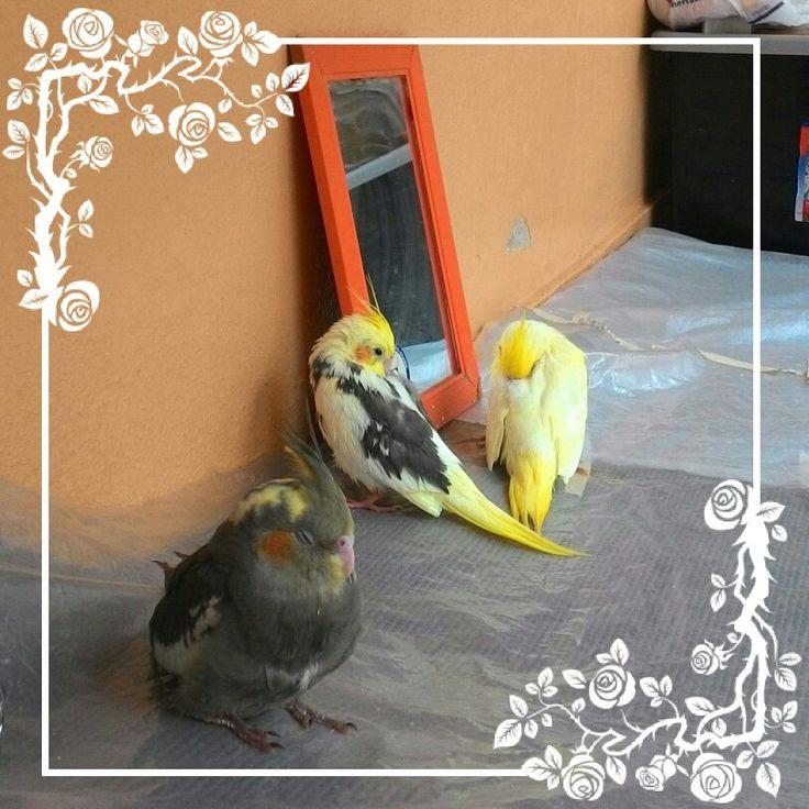 17 mejores ideas sobre periquitos en pinterest p jaros divertidos y mascotas - Piscina los periquitos ...
