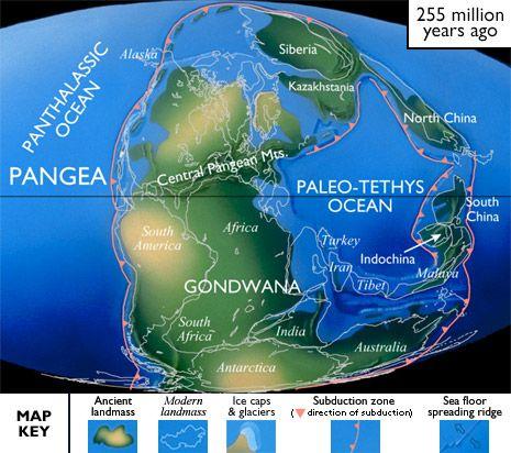 The Paleontology Portal