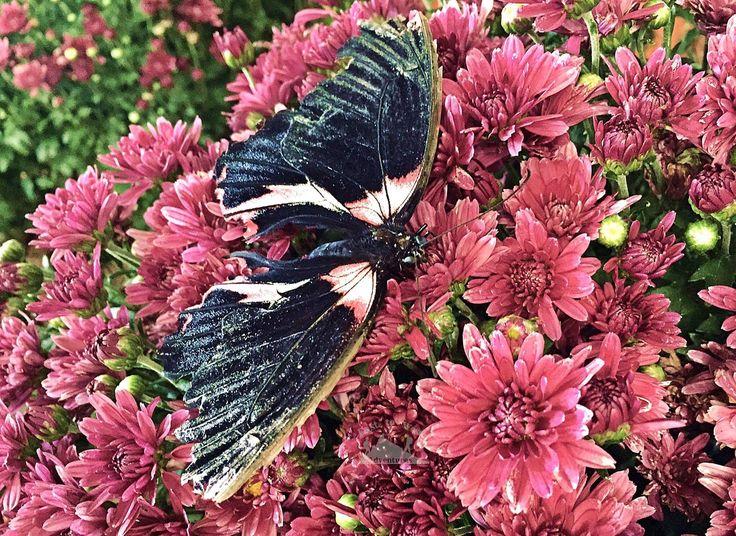 Flowers🌸 in the desert🏜. What a miracle!! 😲💜زهور في الصحراء انها معجزة #easttowestadventures #flowers #gardens #garden #flower #miracle #desert #uae #dubai #miraclegardens #butterfly #butterflies #butterflygarden #bloggers #blog #flowerphotography #dubaisights #whattosee #visitdubai #dubailifestyle