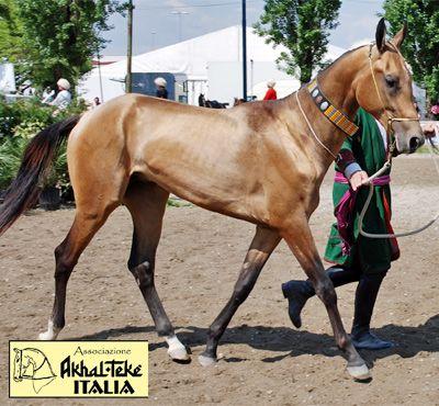IL PORTALE DEL CAVALLO - razze equine