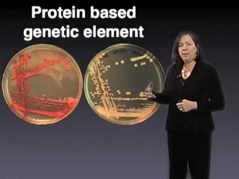 Susan Lindquist (MIT) Part 1: Protein Folding and Prions. Iremember watching this whole thing for cell bio