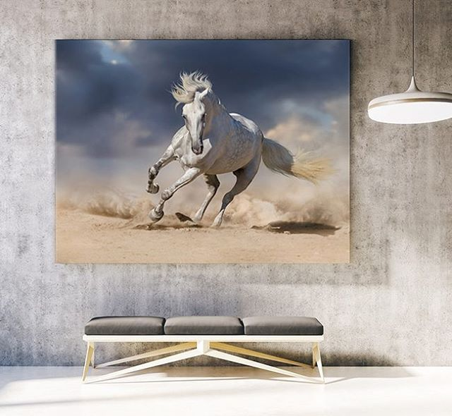 White Stallion.  Code: P000085 Phone: +628118439998 (WA/SMS) Email: sales@canvasdeco.com Website: www.canvasdeco.com Price: Ask by request. . #canvasprinting #canvaspainting #cetakkanvas #cetakkanvas #cetakkanvasjakarta #cetakkanvasphoto #cetakkanvasmurah #lukisan #kanvasprint #canvascustom #hiasandinding #dekorasidinding #walldeco #spanram  #canvasframe#kanvas #canvasposter #printcanvas #walldecoration #vintageposter #canvaspaintings #posterkanvas #printkanvasmurah #walldecor #canvasdeco…