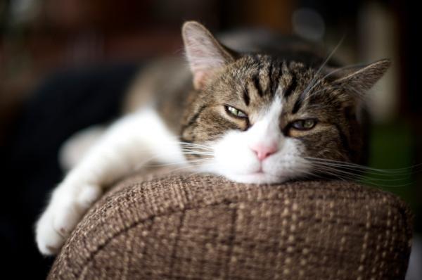 les 10 meilleures images du tableau chats sur pinterest chats cute kittens et illustrations. Black Bedroom Furniture Sets. Home Design Ideas