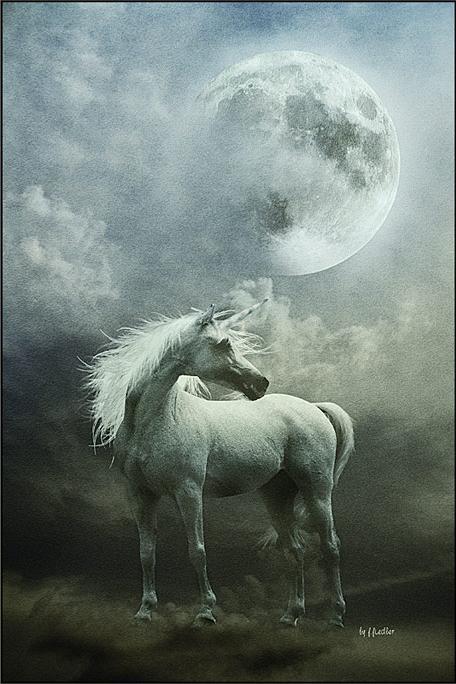 Unicorn Fan Club https://www.facebook.com/pages/Unicorn-Fan-Club/353488018086892