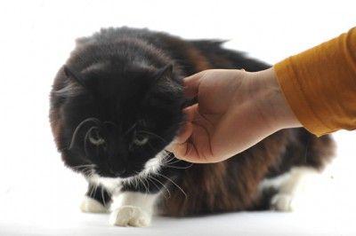 yau blog_pisicutele de la YaU_UCA