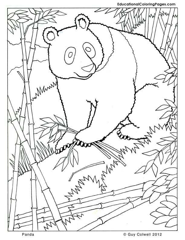 Free Zoo Animal Coloring Pages Panda Coloring Zoo Animals Coloring Cute Free Printables In 2020 Panda Coloring Pages Zoo Animal Coloring Pages Zoo Coloring Pages