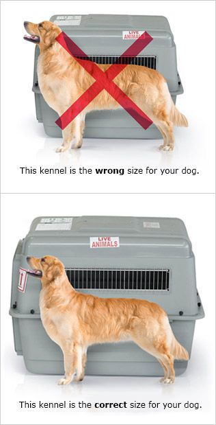 Pet Travel| Kennel Types & Guidelines | United Airlines