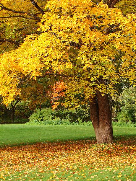 7106 Best Images About Fall Colors On Pinterest Autumn