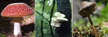 Lähde syyskesäiseen sienimetsään koko perheen voimin!