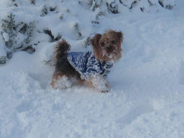 Elmo in the Snow !