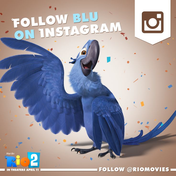 Did you know Blu has his own Instagram account? Follow the flock @Kate Mazur Davis Movie!