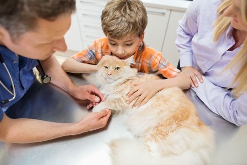 Veterinarian and owners examining cat in vet's surgery