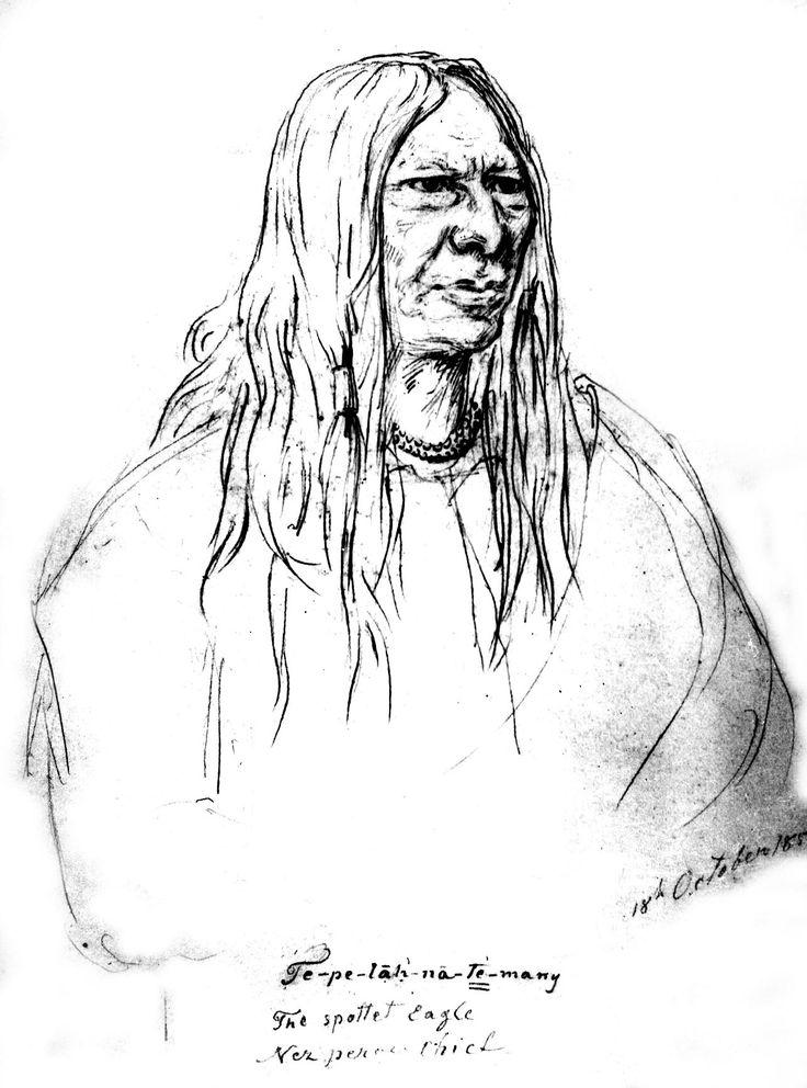 Tepelahnatemany (Aquila Maculata), Nez Percé