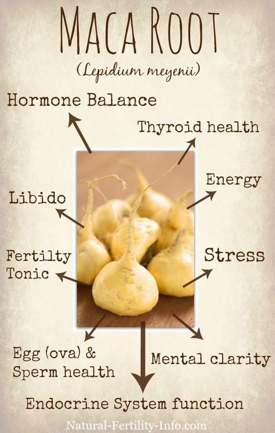 Maca, Wonder Herb For Fertility… – Kim Fels