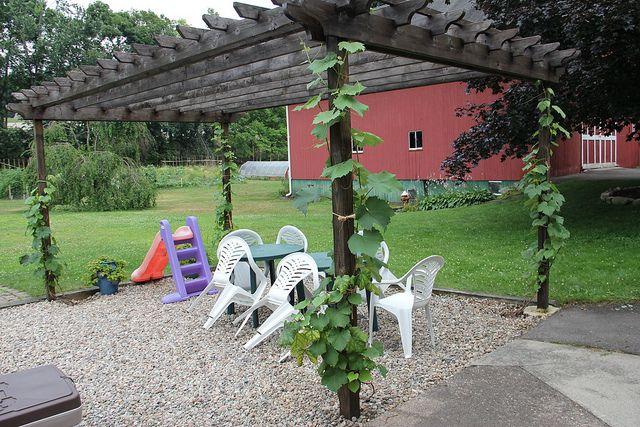 how to build a grape vine trellis